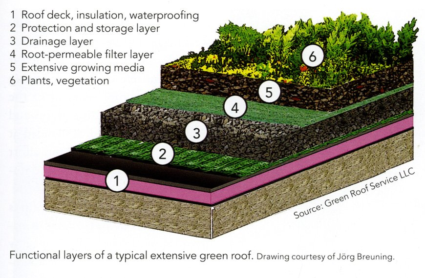 Construction Components Of Green Roofs The Science Of