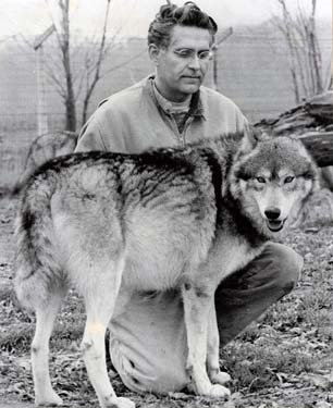 A man sits next to a wolf.