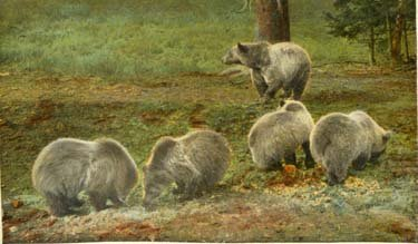 Grizzly bears stand in a clump in a field.