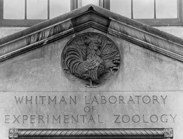 "Ornamentation of a rooster above the engraved words ""Whitman Laboratory of Experimental Zoology"""