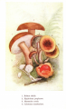 Dallas, E. M., & Burgin, C. A. (1900). Among the mushrooms: A guide for beginners. New York, Philadelphia [etc.]: D. Biddle.