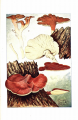 Studies of American fungi: Mushrooms, edible, poisonous, etc